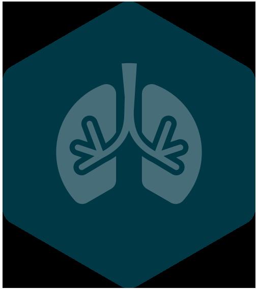 Brethwork- lungs-hexagon